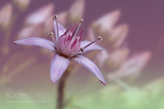 flower at close-up by Kanagasabai-1. @go4fotos