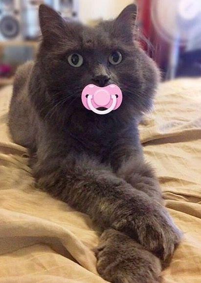 ⇨ Baby cat?