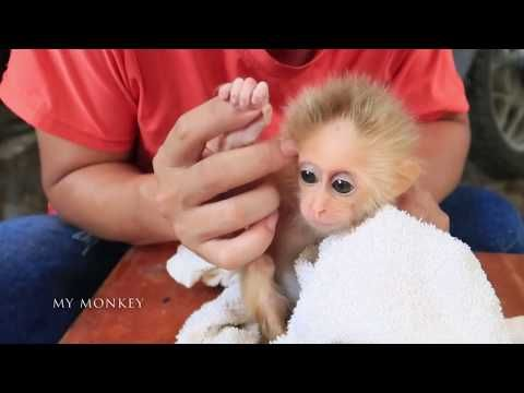 Day 2 Practice Bathing Daily For Emily Youtube In 2020 Cute Baby Animals Monkeys For Sale Baby Animals