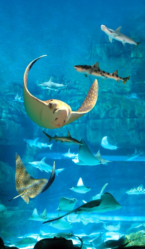 Learning is truly fun at Ripley's Aquarium, in Myrtle Beach, South Carolina,   :)