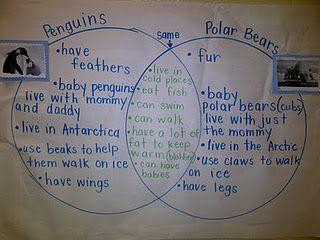 black bear polar bear venn diagram yamaha bear tracker 250 engine diagram