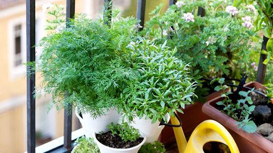 Fines herbes jardin