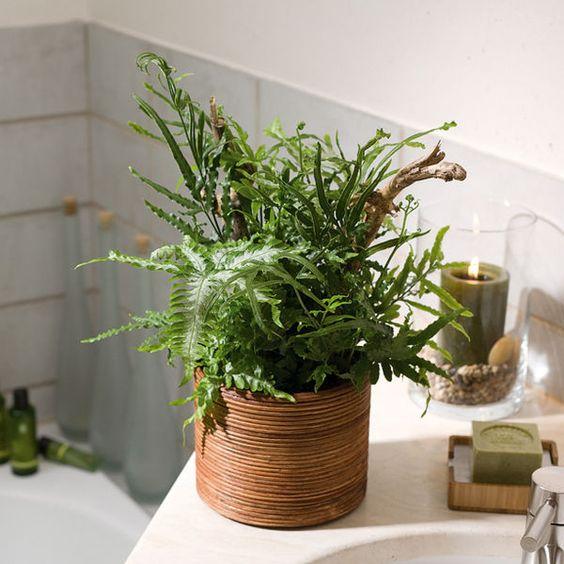 wellness zuhause badezimmer ideen mit pflanzen gef mit farn vasi pinterest deko. Black Bedroom Furniture Sets. Home Design Ideas