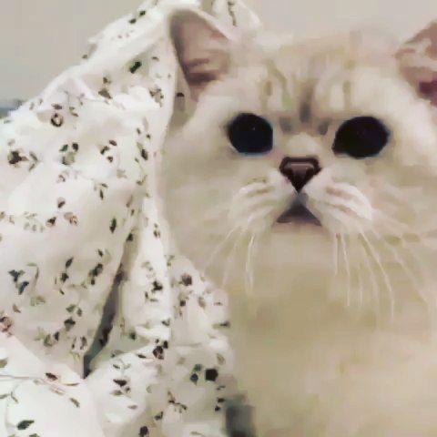 Cat Instagram Related Hashtags Animal Planet Cat Illnesses Animals