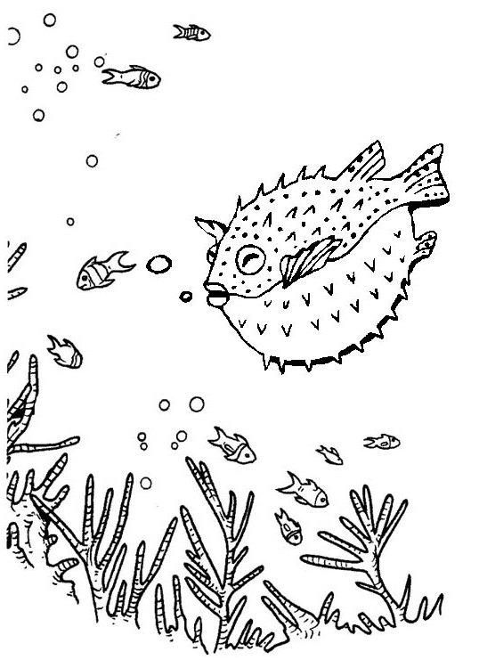 Amazing Puffer Fish In Deep Sea Coloring Page Of Blowfish Fish Coloring Page Puffer Fish Coloring Pages