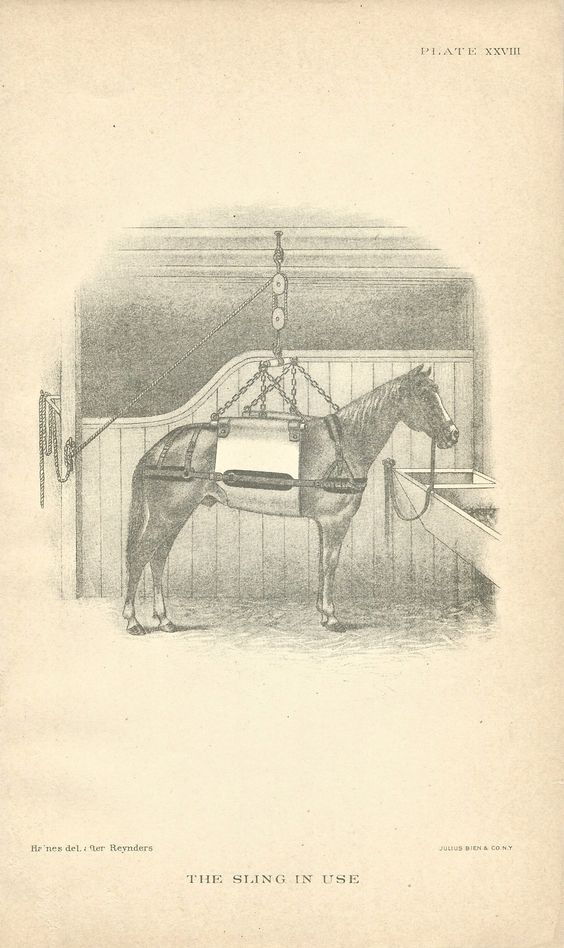 The Sling in Use, of of 8 illustrations from the 1907 edition of Diseases of the Horse.  ($4 for 8)  Available at http://www.uncannyartist.com/products/8-diseases-of-the-horse.