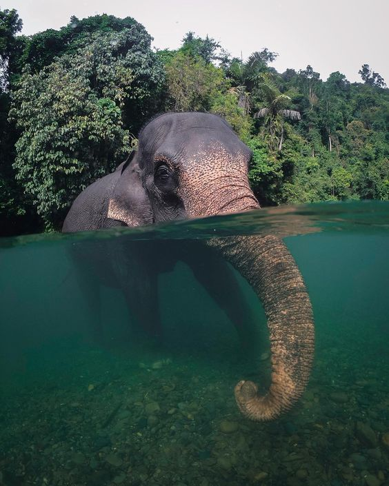 Nothing Like Cooling Off From The Heat With Some Elephant Friends