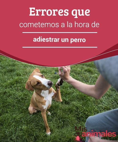 Errores Que Cometemos A La Hora De Adiestrar Un Perro My Animals Adiestrar Perros Perros Mascotas