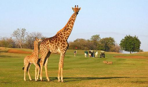 Hans Merensky, South Africa - Golf and Safari 2 for 1