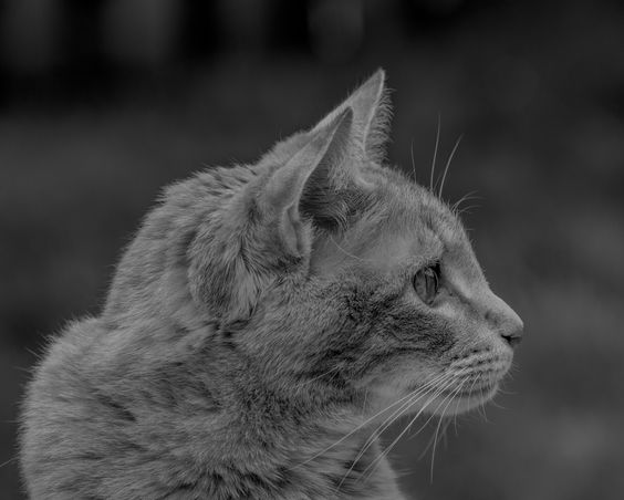 Sammy The Gentle Cat by Jean-Jacques Thebault on 500px