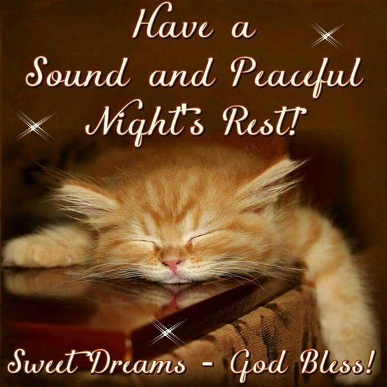 Have A Sound And Peaceful Night S Rest Cat Sleep Good Night God