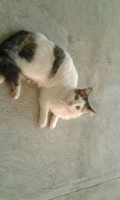 Mi gato Oliver♥♥♥