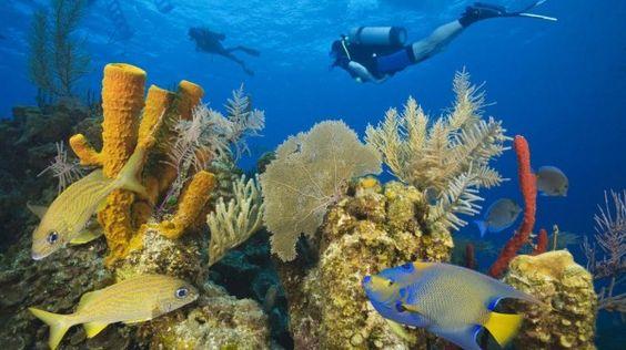Belize Barrier Reef 600x337 im Belize Reiseführer http://www.abenteurer.net/5-belize-reisebericht/
