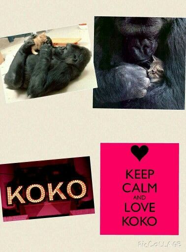 Keep calm and love koko❤
