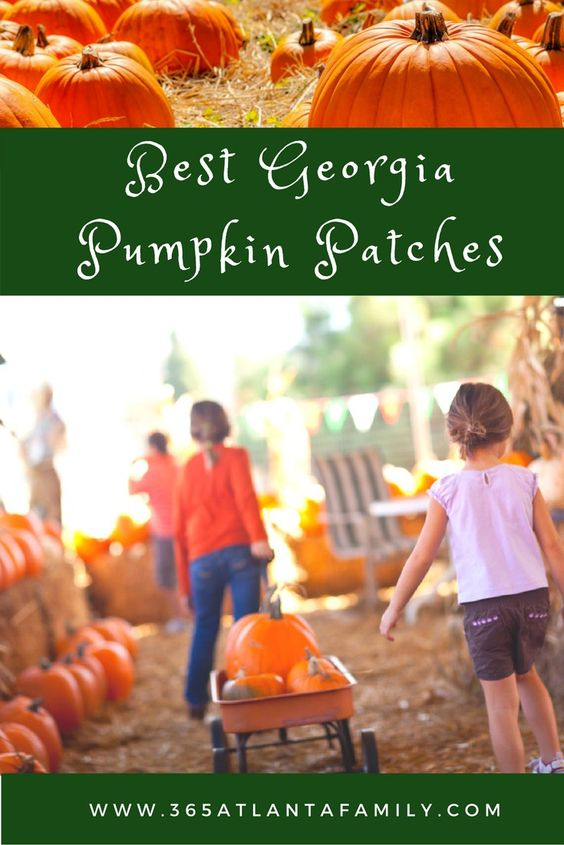 Looking for the best pumpkin patches in Georgia, especially in the Atlanta Metro. We've got a full list for you, sure to make for excellent fall memories.
