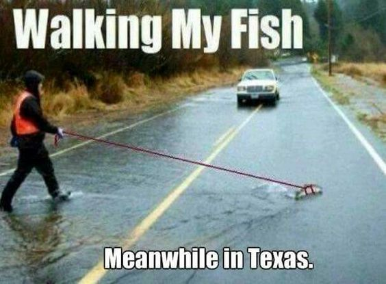 Funny Rainy Day Meme : Pinterest the world s catalog of ideas