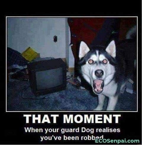 That Moment Ecosenpai In 2021 Funny Dog Memes Funny Animal Memes Dog Memes