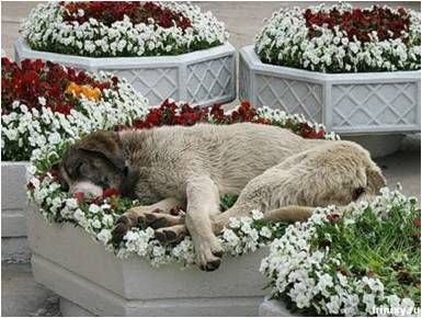 """Gives new meaning to the term """"flower bed"""""""