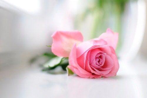 Fina Val Val Fina Flowers Beautiful Flowers Rose Flower Wallpaper