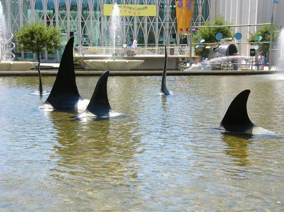 """""""Orcas"""" at Pacific Science Center"""