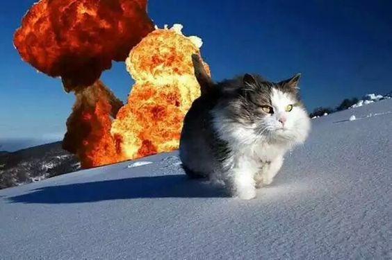 ネコ 猫 cat