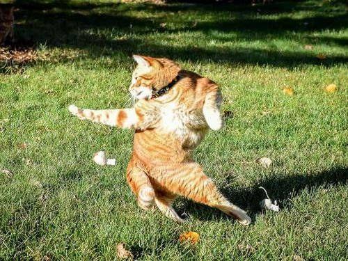 Ninja kitty practicing