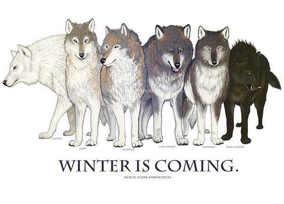 Which one is your favorite direwolf? {From left to right : Ghost (Jon) - Lady (Sansa) - Summer (Bran) - Grey Wind (Robb) - Nymeria (Arya) - Shaggydog (Rickon)} by got_insider