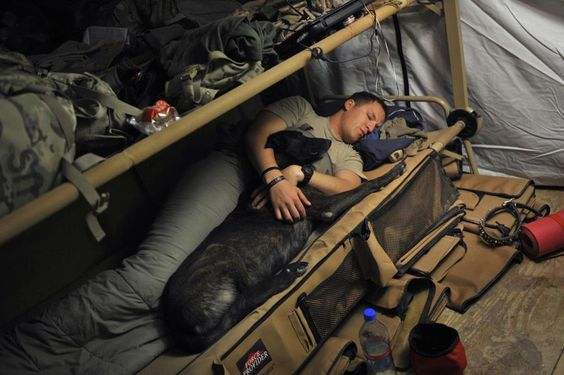 Sweet dreams, best friends...  During deployments, dogs and handlers can be together 24/7. They develop bonds they say are often deeper than the handlers have with close family. No wonder so many handlers want to adopt the dogs they've served with.
