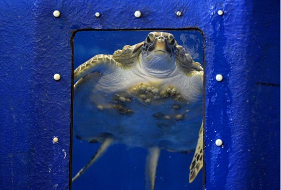 ... best news photographs of the day The Turtles, Wimbledon and Aquarium