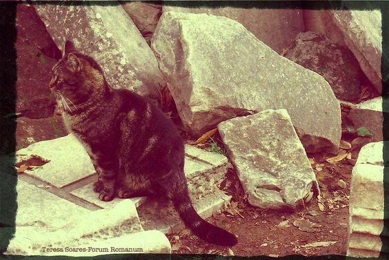in Forum Romanum, Roma -  a cat