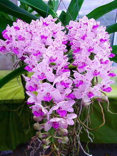 Love orchids!!