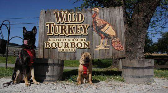 Pet Friendly Travel The Kentucky Bourbon Trail Kentucky Bourbon Trail Bourbon Trail Dog Friendly Vacation