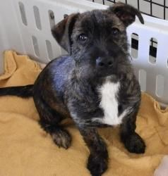 Dixie is an adoptable Wirehaired Terrier Dog in Valley, AL. This sweet and loveable man is ready to be adopted to a loving and caring person.