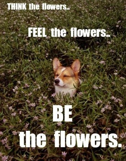 🐾🌸🐾🌸 Ha ha!😜 #gardenmemes #flowermemes #memesaboutflowers #memesaboutplants #plantmemes #corgi #cutedogs #flowers #humor #sillymemes #ilovegardening #gardenlovers #bestgardencareinfo