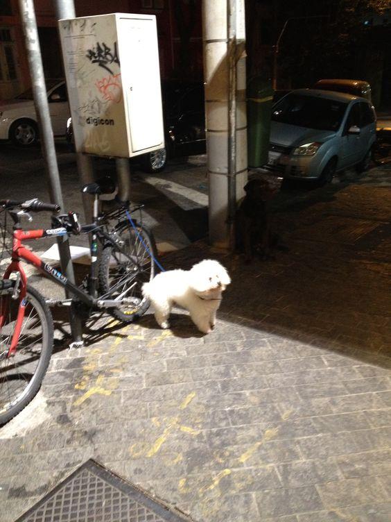 """Dia 4. Noite. Rotina da cidade: """"estacionamento"""" para cachorro na esquina da Padaria Charme, domingo, 19h. O estacionamento é disputado e quase sempre está ocupado. É tão frequente ver na padaria pessoas com pets como com filhos."""