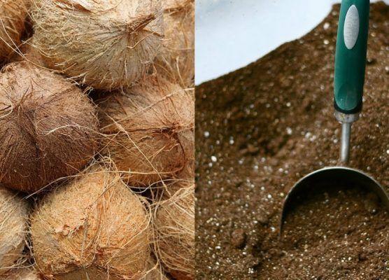 80493cdd95e25e1e4a901d2688f23934 - How To Use Coconut Coir In Gardening