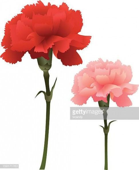 The Story Of Carnation Flower Cartoon Has Just Gone Viral Carnation Flower Ca Carnation Cartoon Flower Story Viral In 2020