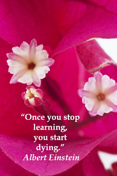 Once you stop learning, you start dying.  Albert Einstein -- Explore 50 intriguing quotations  on education and learning at http://www.examiner.com/article/fifty-quotations-inspire-education-and-learning