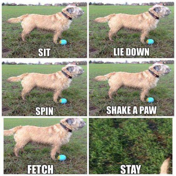 Border terriers :)
