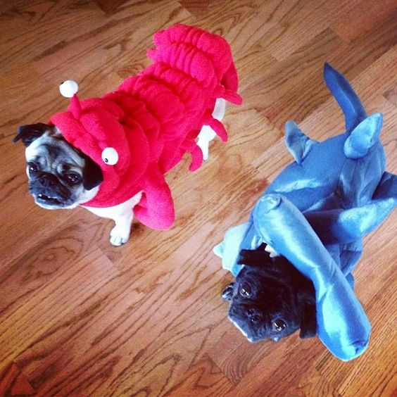 These dogs are styling the latest fish fashion looks. Simply adorable!