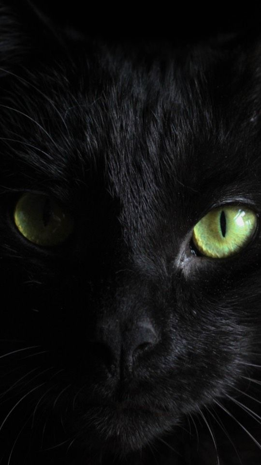 Black Cat Wallpaper In 2020 Cats Beautiful Cats Animals