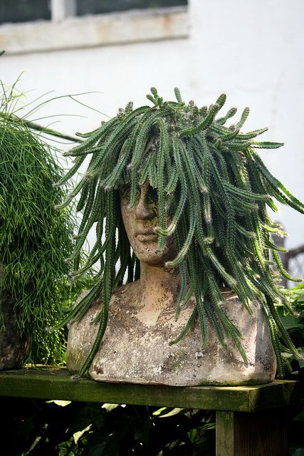 Pinterest the world s catalog of ideas - Medusa head planter ...
