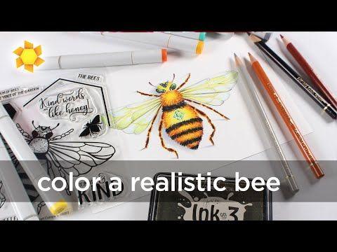 Coloring A Realistic Bee Social Media Break Youtube In 2020 Bee Bee Cards Social Media Break