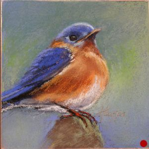 Handsome Bluebird