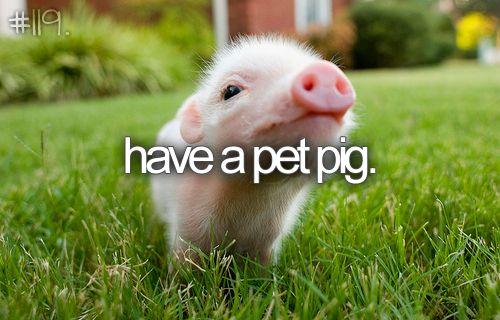 have a pet pig. <3