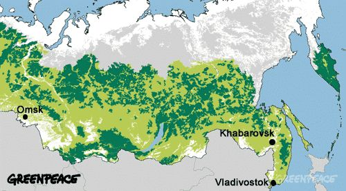 Map of remaining intact ancient forest in Russia.