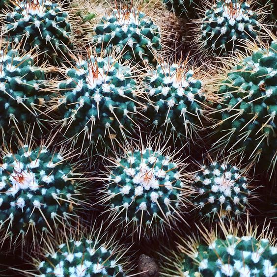 Cactus botanical inspiration from the BarbicanConservatory