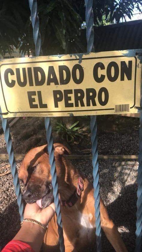 Cuidado Con El Perro Que Te Puede Morder Perros Graciosos Humor Divertido Sobre Animales Memes Perros