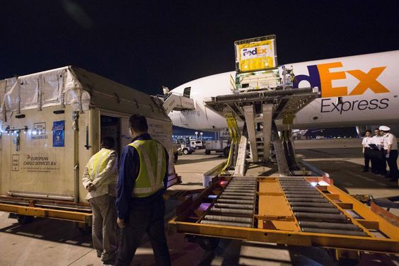 FedEx ships 60 thoroughbred horses to China Cargo Airlines - fedex jobs