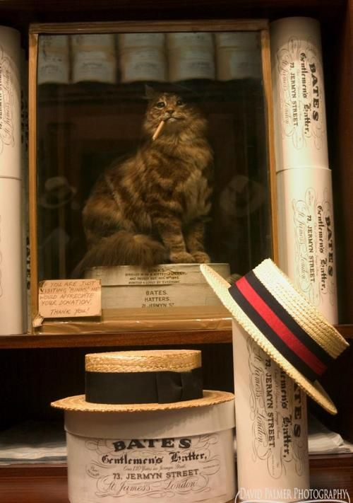 Hat Cat Shop Jermyn Street